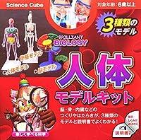 【人体】モデルキット(3種類のモデル) BRILLIANT BIOLOGY