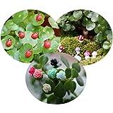 Tophappy 100pcs Miniature Fairy Garden Ornaments Kit Set, Ladybugs,Mushrooms, Flowers with Tools for DIY Fairy Garden Dollhou