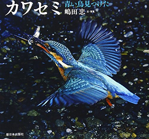 カワセミ―青い鳥見つけた (日本の野鳥)