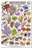 Marine Invertebrates - Florida, The Bahamas & Caribbean ID card by fishcardscom
