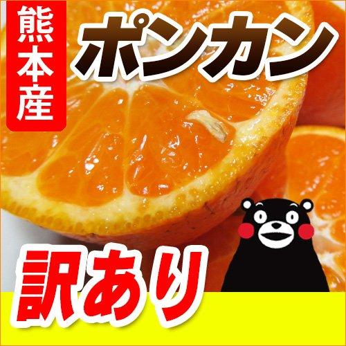 熊本産 訳あり ポンカン 5kg 【 九州 熊本 ミカン ぽんかん 柑橘 デコポン 】