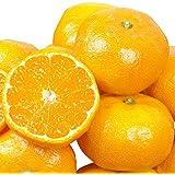 国華園 熊本産 ご家庭用 温州みかん 10kg 柑橘 蜜柑 みかん