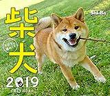 2019カレンダー 柴犬おはなし週めくり