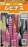 サカタのタネ 実咲花7860 ルピナス ラッセルミックス 00907860