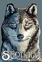 セコイア国立公園–Wolf Up Close 9 x 12 Art Print LANT-30912-9x12