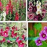 花タチアオイ、タチアオイの種子、花の種、約20粒子