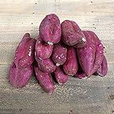 訳あり・規格外品 紫芋(パープルスイートロード)5kg入り