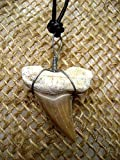 サーファー!勇気のお守り★サメの歯化石チョーカー