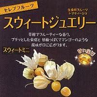食用ホオズキ:スウィートジュエリースウィートミニ3号 4株セット[わい性早穫品種][セレブフルーツ] ノーブランド品