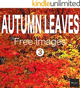 AUTUMN LEAVES Free Images 3  BEIZ images - Free Stock Photos (English Edition)