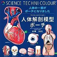 サイエンステクニカラー 人体解剖模型ポーチ全8種 ガチャコンプリートセット