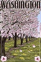 ワシントン–Cherry Blossoms 12 x 18 Art Print LANT-41392-12x18