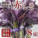 赤しそ 赤紫蘇 赤シソ 8束入 2kg 福岡県産