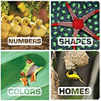 Becker's School Supplies Picture This Board Book Set (Set of 4) [並行輸入品]