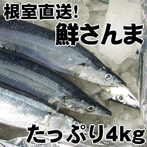 根室産とろサンマ(約4kg 33~35尾)お刺身にできる!北海道産生さんまを水氷でお届けします。