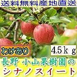 訳あり 産地直送 長野産 シナノスイート ご家庭用 約4.5kg 12~25個入