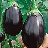 Eggplant Black Beauty 15 Seeds Spring Summer Heirloom Vegetable Garden Aubergine