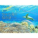 2016うみまーる中判ムーンカレンダー `ちゅら海のなかまたち−Friends of the Okinawan sea' (月の満ち欠け)