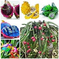 50個アロエベラ多肉植物ラッキーアロエ種子屋内種子食用美容フルーツ野菜野菜簡単に育ちます:14
