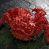 浜茹で花咲ガニ900g×1尾根室の花咲港で水揚げされる花咲蟹は大変貴重な蟹です。