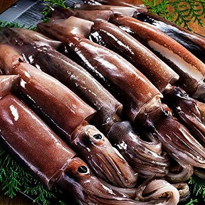 ますよね 日本海産 お刺身用 するめいか(真イカ) スルメイカ 7ハイ(1.5kg前後)