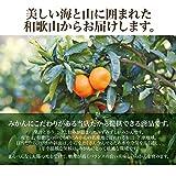 みかん 10kg 箱買い 和歌山県産 下津みかん 高糖度 訳アリ 送料無料