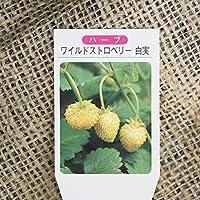 ワイルドストロベリー 苗 【ワイルドストロベリー (白実)】 3号ポット苗×5株セット