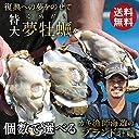 カキ漁師海遊【夢牡蠣】生かき 真牡蠣 殻付き 生食用 送料無料 ブランド牡蠣 大粒 石巻産 産地直送 15個