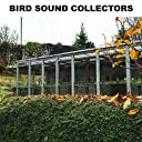 Bird Song in the Morning