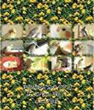 ゆめみるオカメインコカレンダー2011 ([カレンダー])