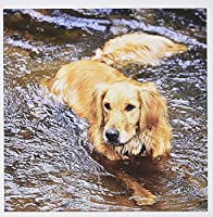 Danita Delimont – 犬 – Purebred Golden Retriever Dog – na02 pwo0091 – PiperAnneウースター – グリーティングカード Set of 6 Greeting Cards