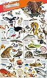 DKfindout! Animals Poster 画像