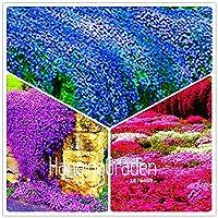 昇進!100個のパックロッククレス盆栽ペレニールフラワーグランズガーデンホームガーデンの植物:MIX