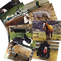 Farm Animal Posters Real Photo Classroom Decorations for Preschool Bulletin Boards & Circle Time 10 Large Picture Cards 【Creative Arts】 [並行輸入品]