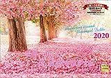 世界一美しい花風景を散歩する 2020年 カレンダー 壁掛け SD-2 (使用サイズ594x420mm) 風景