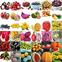 16_10Pcs人参フルーツ:卸売マルチ-Styleフルーツ種子園庭鉢植え植物種子盆栽インテリア