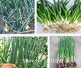 野菜のエシャロットの種子、四季ニラ種子、タマネギの種子は、私はオリジナルパッケージを発芽したい、100個/袋ガーデンボンズ