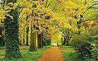 秋、公園、木、黄色の葉、パス、ベンチ キャンバスの 写真 ポスター 印刷 旅行 風景 景色 - (50cmx33cm)