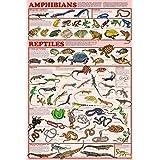 Amphibians and Reptiles教育科学教室チャートポスター24 x 36 24x36 Laminated Print XXX-A153F-LAM