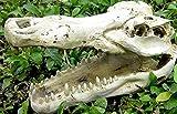 爬虫類用品  亀のケイブ 隠れ家 シェルター スパイダー トカゲ 頭蓋骨 樹脂