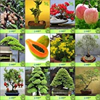 SEED盆栽種子:種子とSコンボタマリンド、ブーイング、Gulmohar、フープパイン、パパイヤ、Tecomaシュタンス、ユーカリ、agranateナナガーデン種子種子(パケットあたり10)