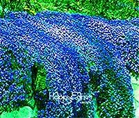 2:セール!100ピース/ロットロッククレス種子多年生開花グラウンドカバー種子用ホームガーデン