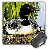 3Dローズ 鳥 ‐ 水潜り鳥(鴨) - マウス パッド - マウスパッド - mp_709_1 (並行輸入)