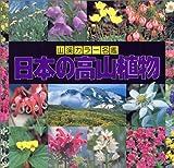 日本の高山植物 (山渓カラー名鑑) 画像