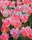 咲いたチューリップかわいい球根草花—すてきなガーデニング (主婦の友生活シリーズ)