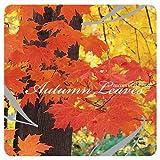 Autumn Leaves 画像