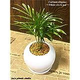 送料無料 テーブルヤシ 観葉植物 鉢植え 陶器 インテリア 北欧 ギフト お祝い おしゃれ ホワイトサークル
