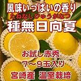 お試し 宮崎県 プリンセス 種無日向夏 赤秀 7-9玉