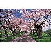 1000ピース 桜色の並木道-岩手 (50x75cm)