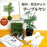 苔玉キット 苗つき テーブルヤシ
